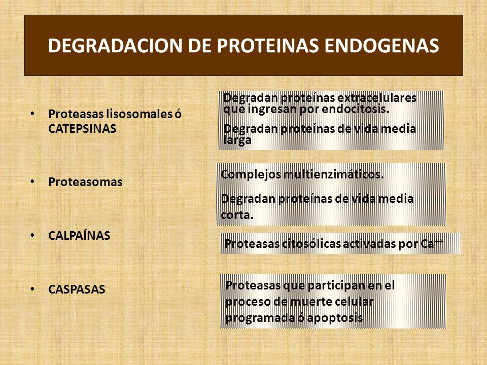 DEGRADACION DE PROTEINAS ENDOGENAS