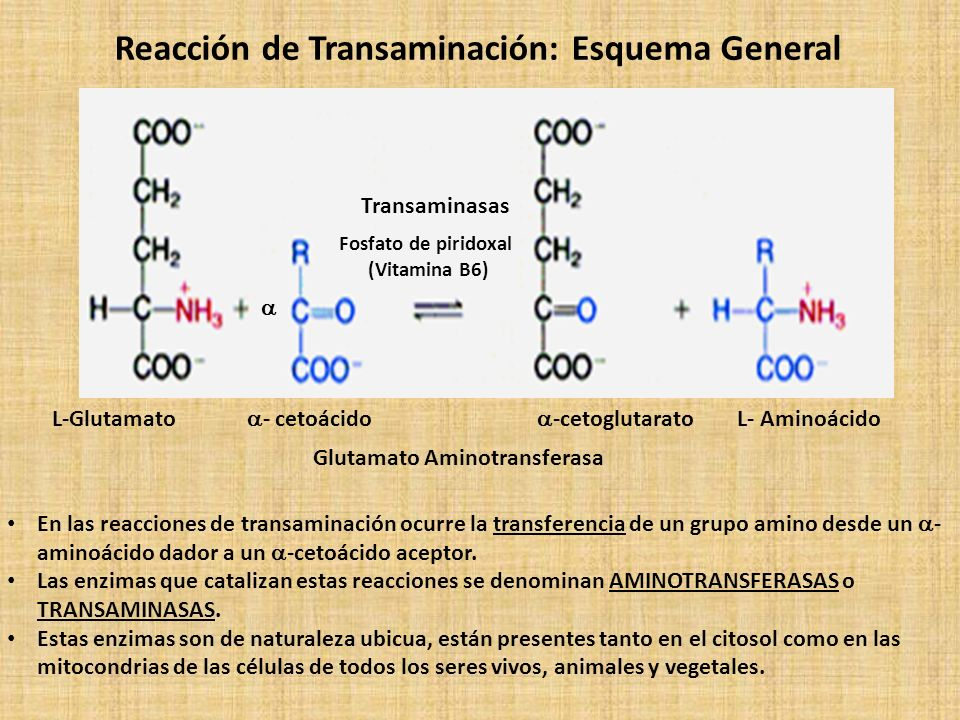 Reacción de Transaminación: Esquema General