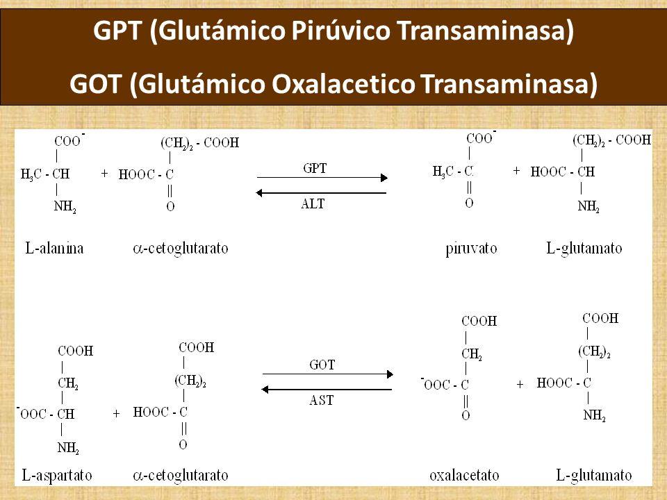 GPT (Glutámico Pirúvico Transaminasa)