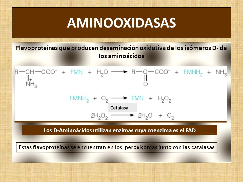 Los D-Aminoácidos utilizan enzimas cuya coenzima es el FAD