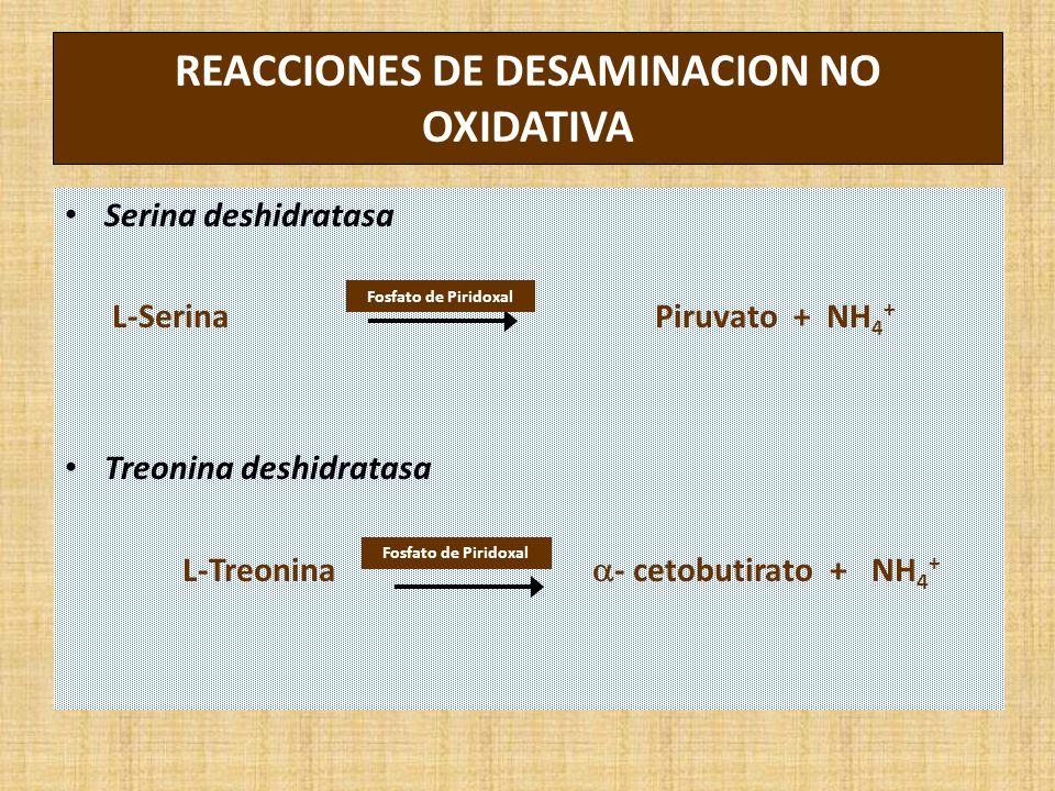 REACCIONES DE DESAMINACION NO OXIDATIVA