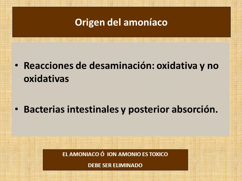 EL AMONIACO Ó ION AMONIO ES TOXICO