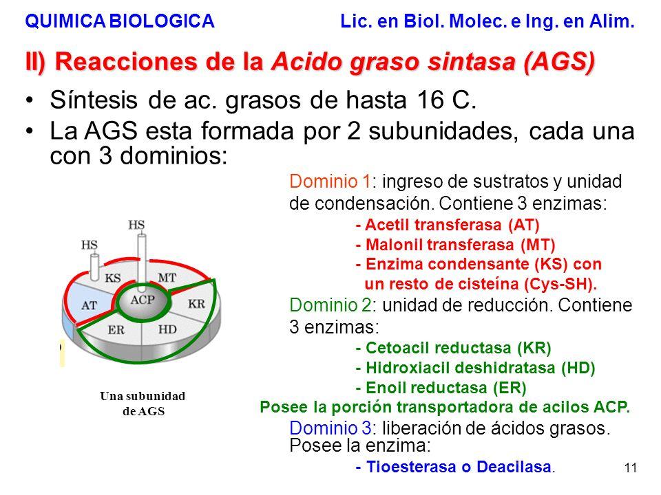 II) Reacciones de la Acido graso sintasa (AGS)