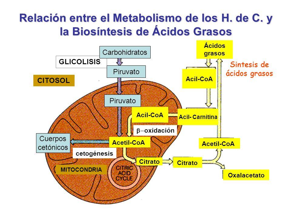 Sintesis de ácidos grasos
