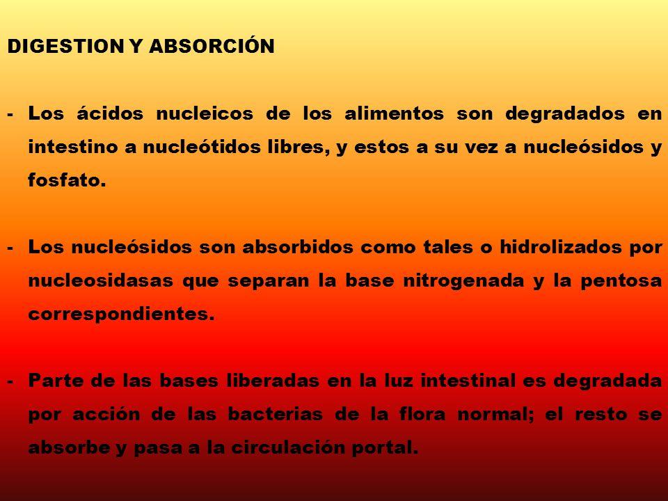 DIGESTION Y ABSORCIÓN