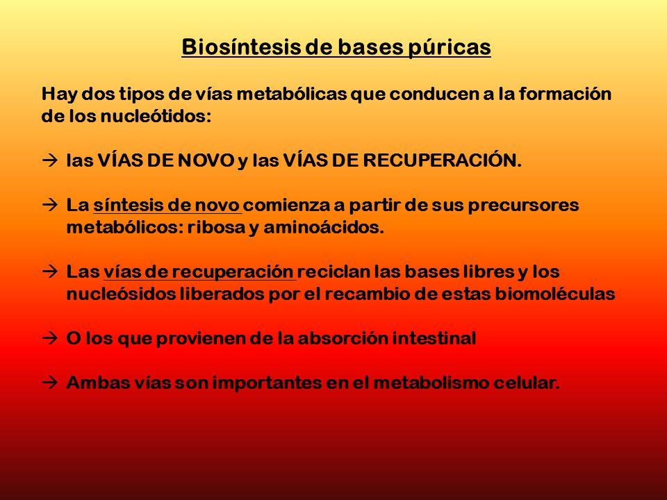 Biosíntesis de bases púricas