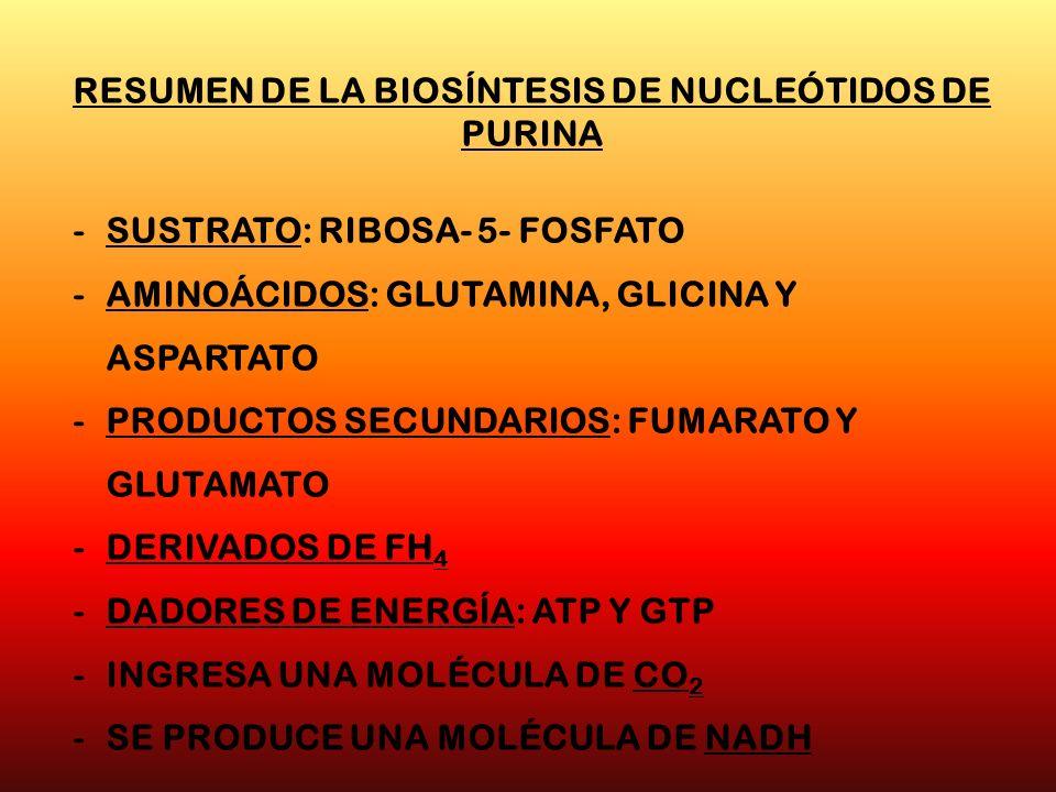 RESUMEN DE LA BIOSÍNTESIS DE NUCLEÓTIDOS DE PURINA