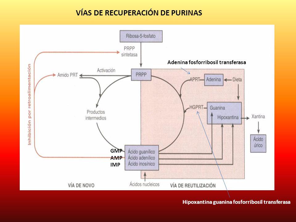 VÍAS DE RECUPERACIÓN DE PURINAS