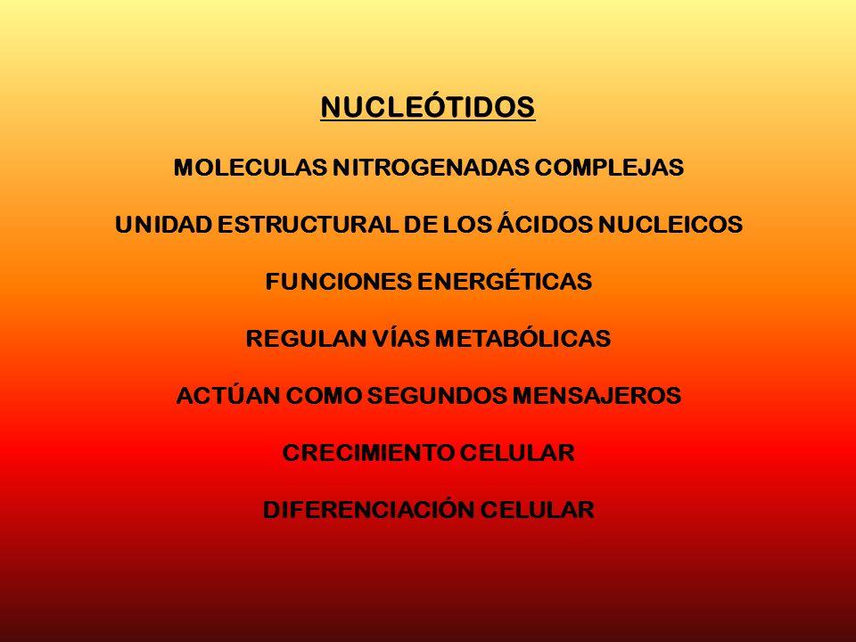 NUCLEÓTIDOS MOLECULAS NITROGENADAS COMPLEJAS