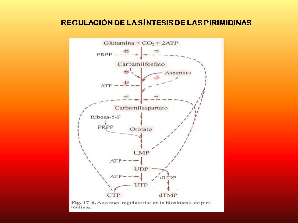 REGULACIÓN DE LA SÍNTESIS DE LAS PIRIMIDINAS