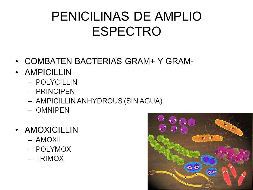 PENICILINAS DE AMPLIO ESPECTRO