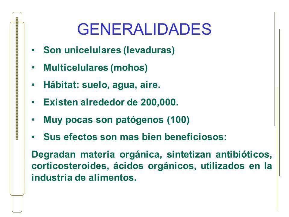 GENERALIDADES Son unicelulares (levaduras) Multicelulares (mohos)