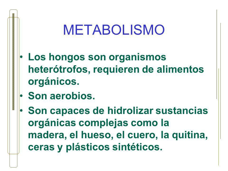 METABOLISMO Los hongos son organismos heterótrofos, requieren de alimentos orgánicos. Son aerobios.