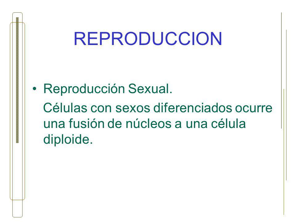 REPRODUCCION Reproducción Sexual.
