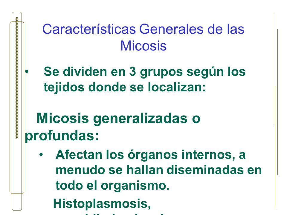 Características Generales de las Micosis