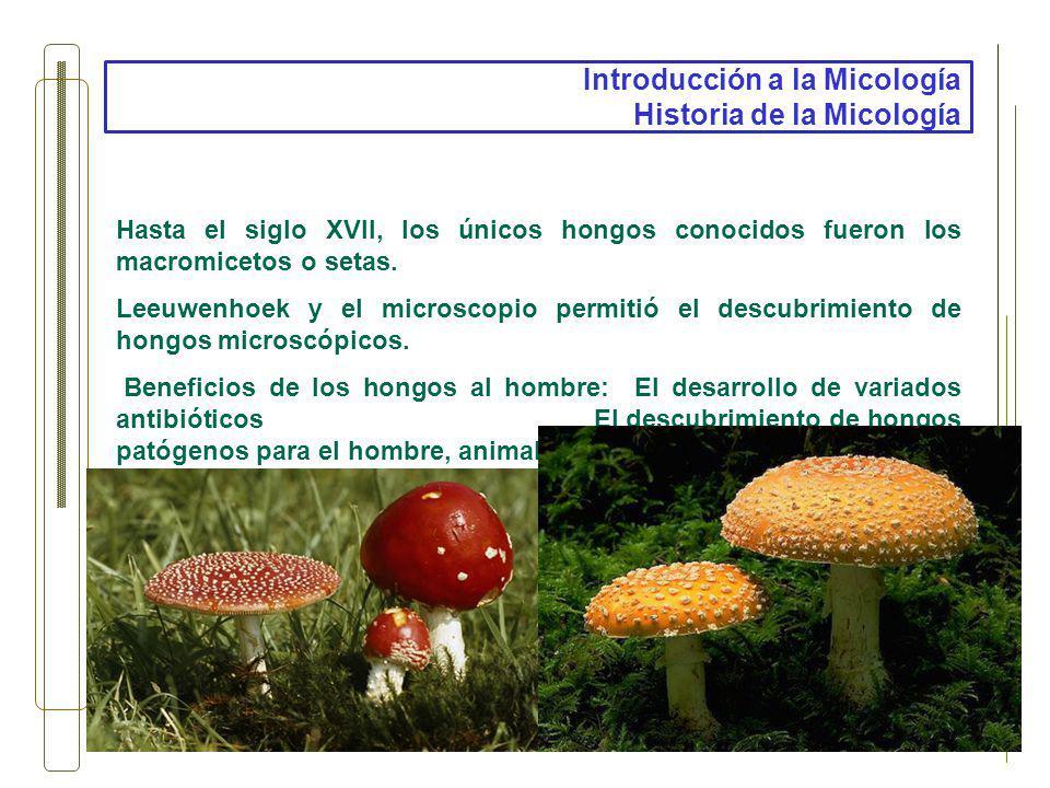 Introducción a la Micología Historia de la Micología