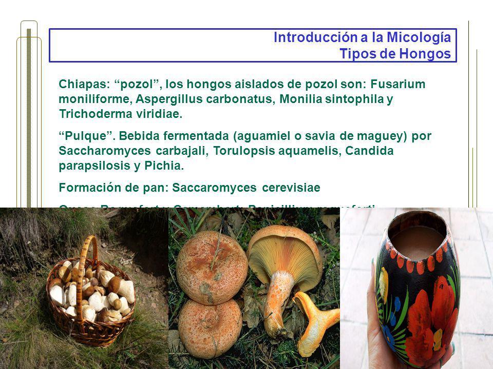 Introducción a la Micología Tipos de Hongos