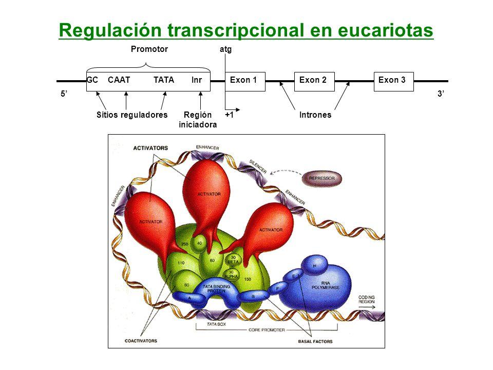 Regulación transcripcional en eucariotas
