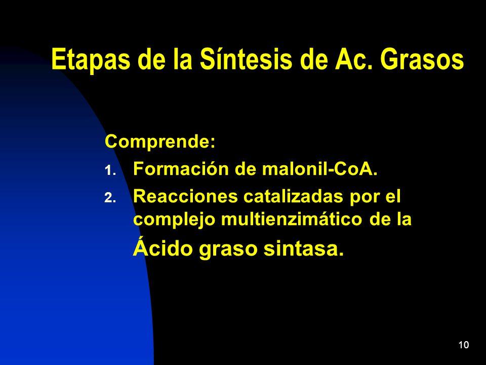Etapas de la Síntesis de Ac. Grasos