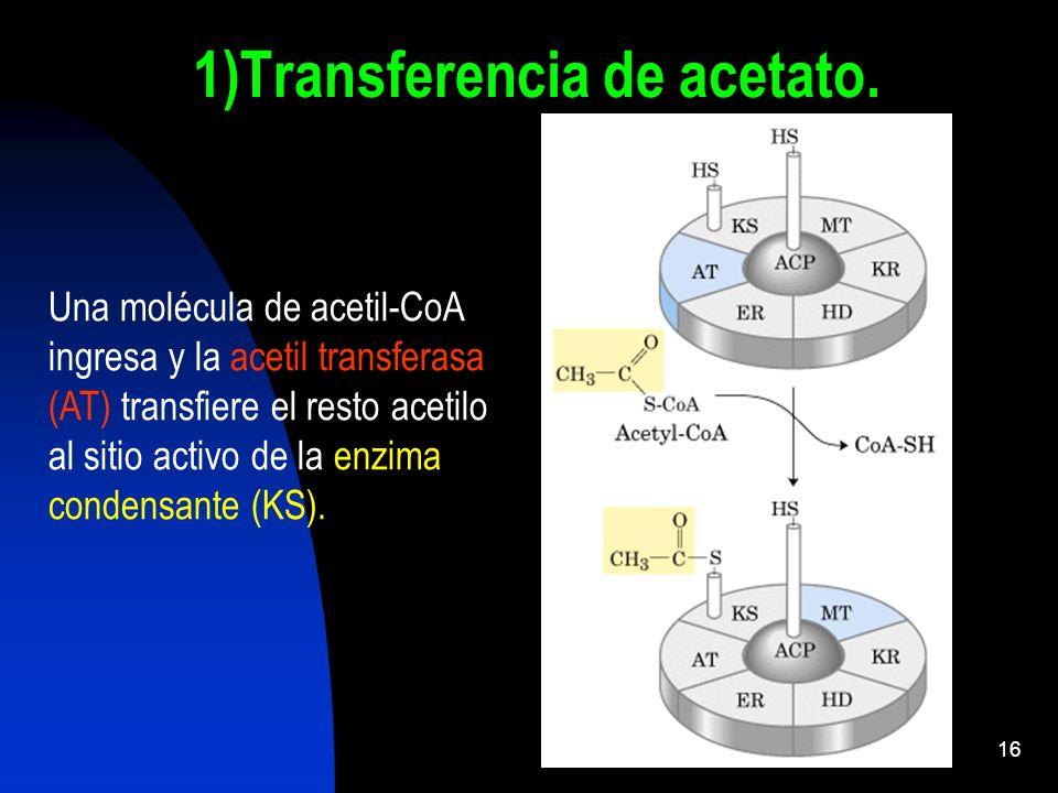 1)Transferencia de acetato.