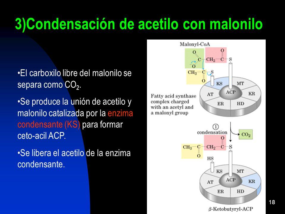 3)Condensación de acetilo con malonilo
