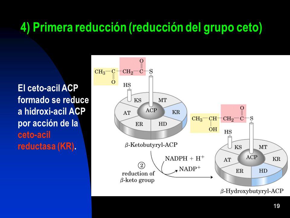 4) Primera reducción (reducción del grupo ceto)