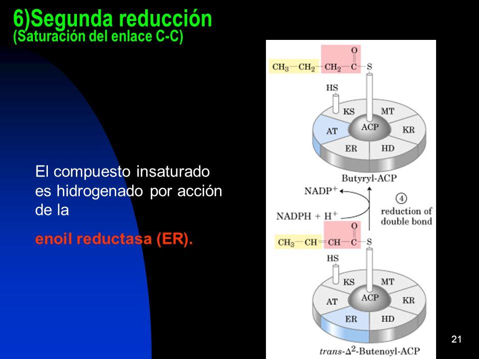 6)Segunda reducción (Saturación del enlace C-C)