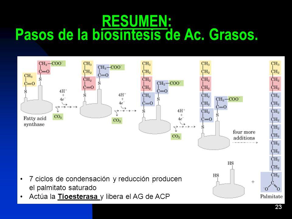 RESUMEN: Pasos de la biosíntesis de Ac. Grasos.