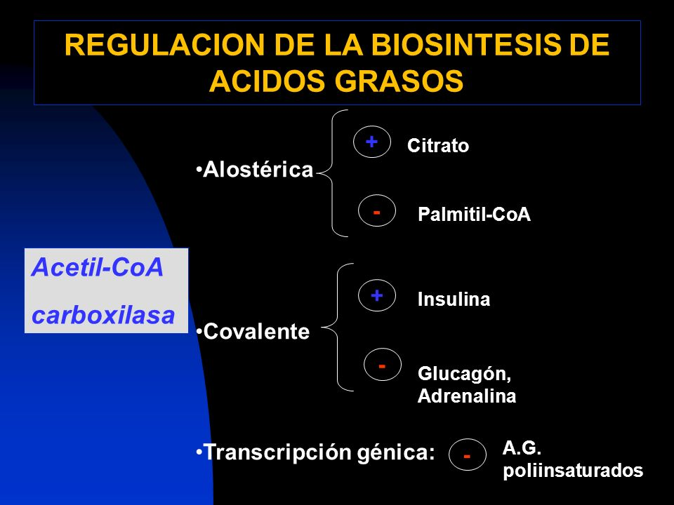REGULACION DE LA BIOSINTESIS DE ACIDOS GRASOS