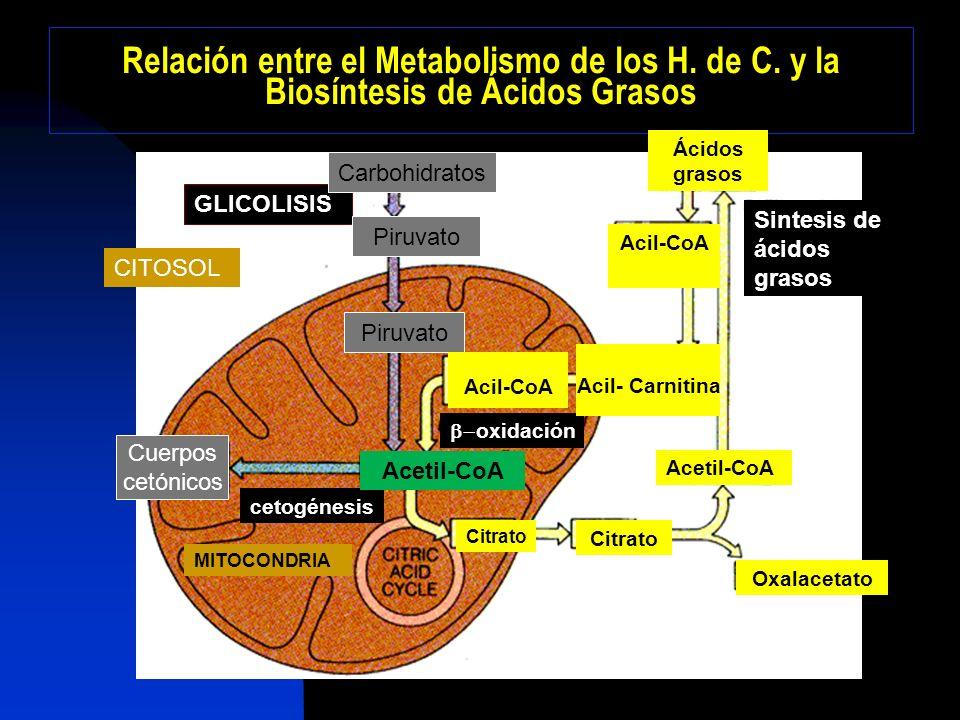 Relación entre el Metabolismo de los H. de C