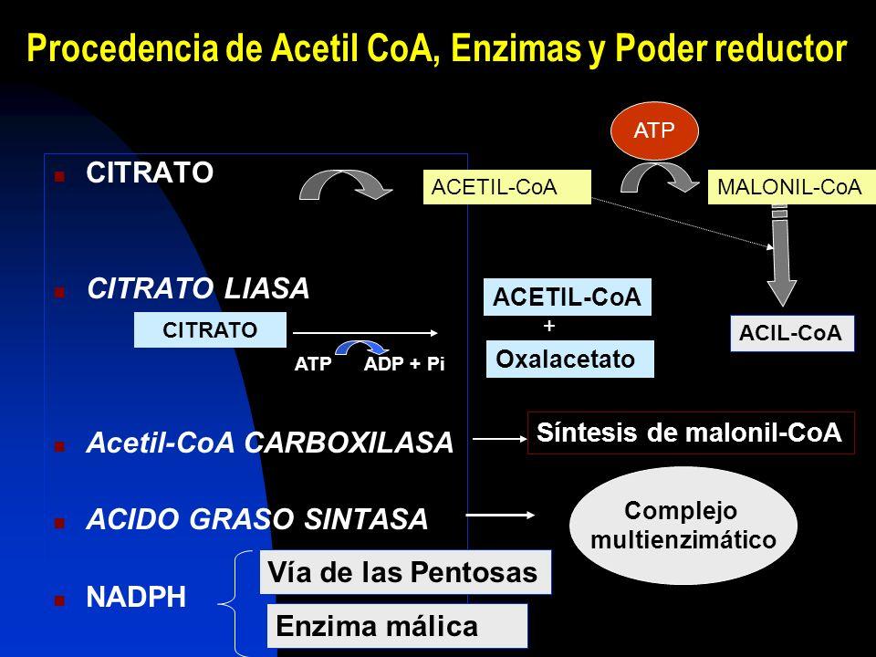 Procedencia de Acetil CoA, Enzimas y Poder reductor