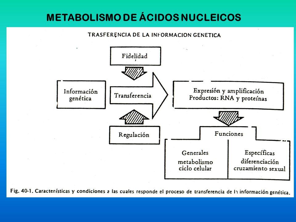 METABOLISMO DE ÁCIDOS NUCLEICOS