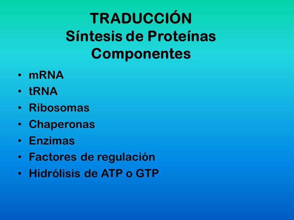 TRADUCCIÓN Síntesis de Proteínas Componentes