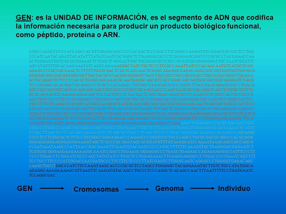 GEN: es la UNIDAD DE INFORMACIÓN, es el segmento de ADN que codifica la información necesaria para producir un producto biológico funcional, como péptido, proteína o ARN.