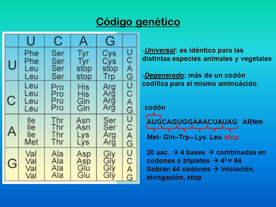 Código genético Universal: es idéntico para las