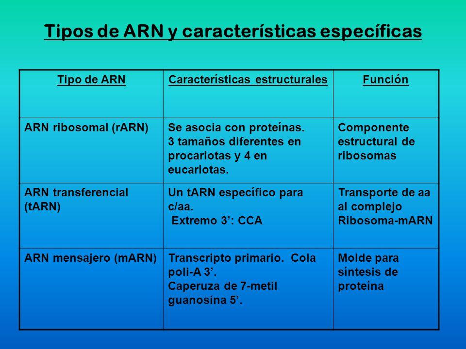 Tipos de ARN y características específicas