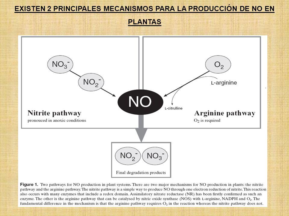 EXISTEN 2 PRINCIPALES MECANISMOS PARA LA PRODUCCIÓN DE NO EN PLANTAS