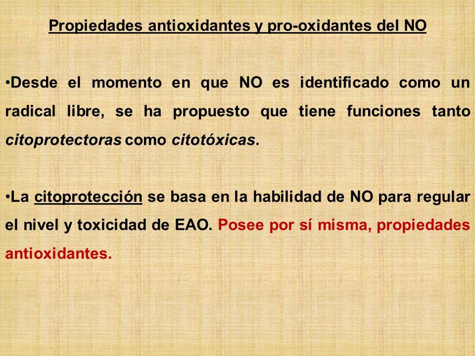 Propiedades antioxidantes y pro-oxidantes del NO
