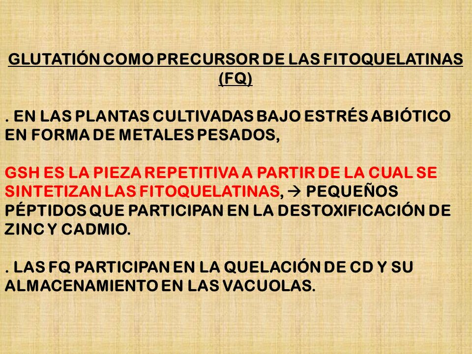 GLUTATIÓN COMO PRECURSOR DE LAS FITOQUELATINAS (FQ)