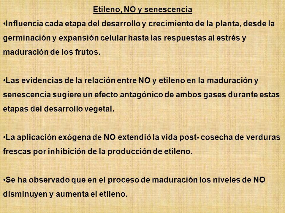 Etileno, NO y senescencia