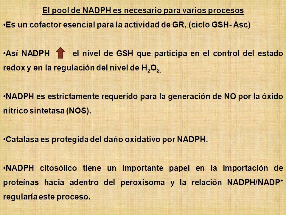 El pool de NADPH es necesario para varios procesos