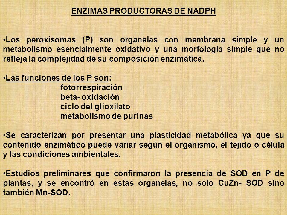 ENZIMAS PRODUCTORAS DE NADPH