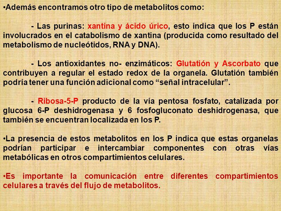 Además encontramos otro tipo de metabolitos como: