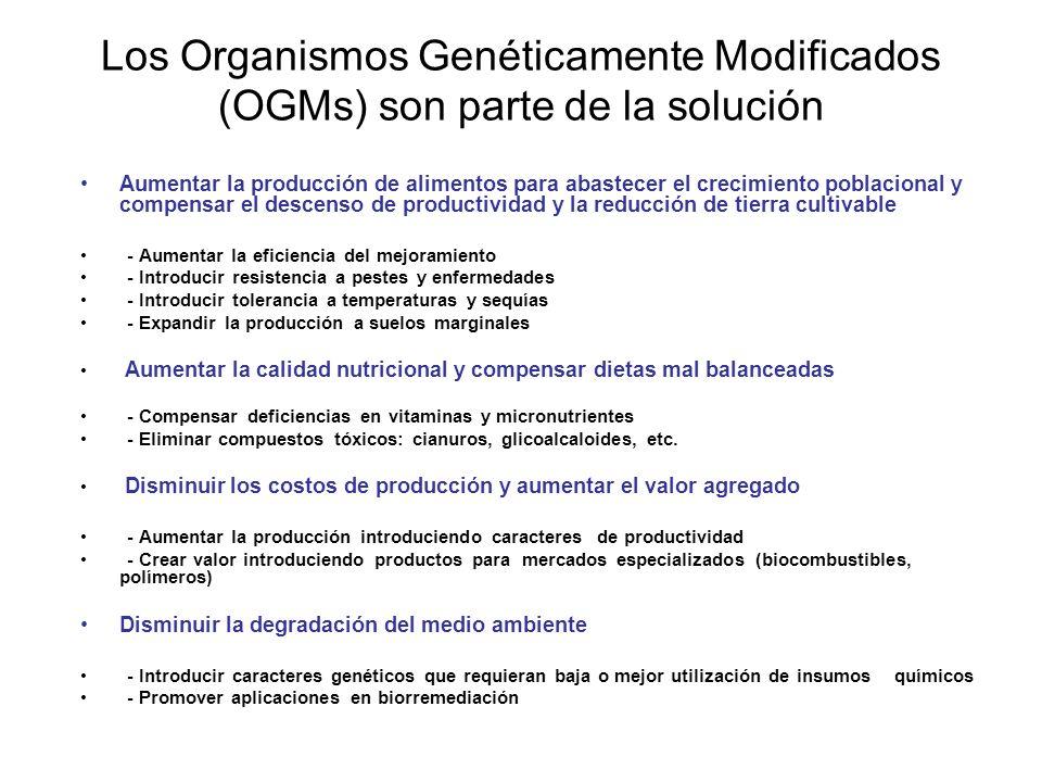 Los Organismos Genéticamente Modificados (OGMs) son parte de la solución