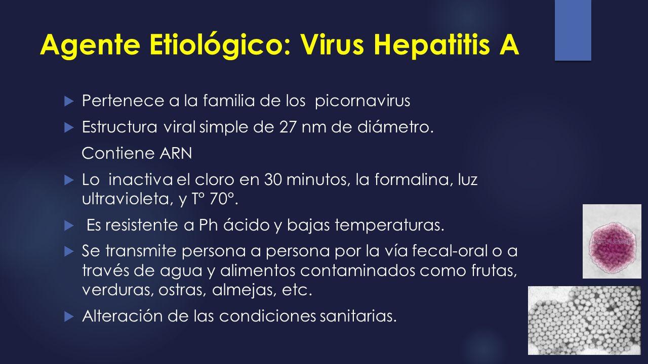 Agente Etiológico: Virus Hepatitis A
