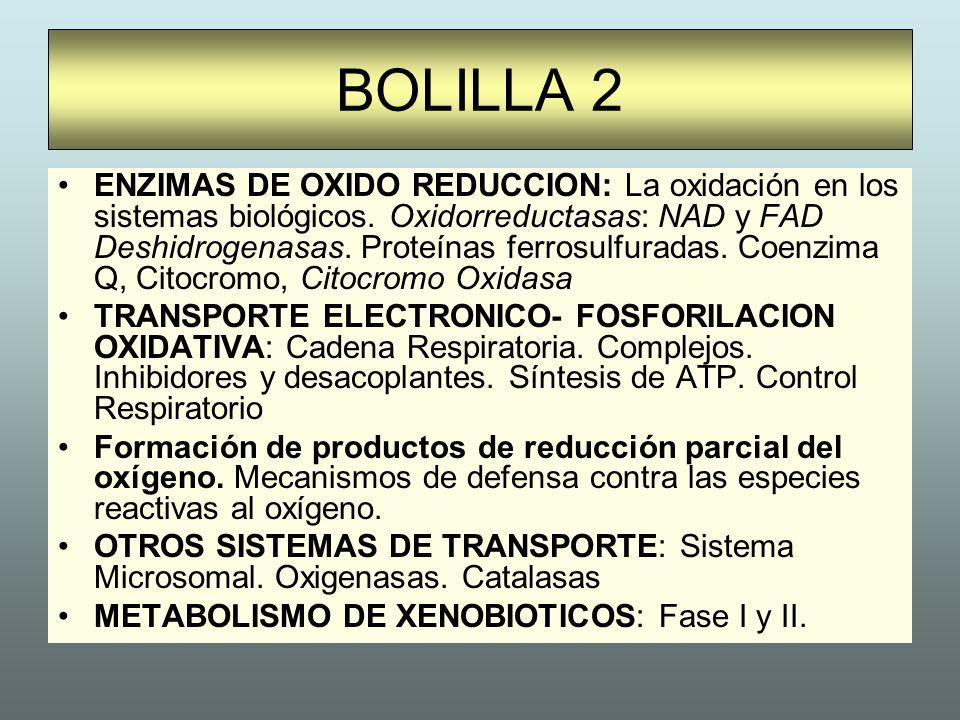 BOLILLA 2