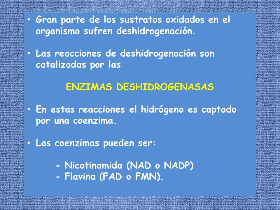 ENZIMAS DESHIDROGENASAS
