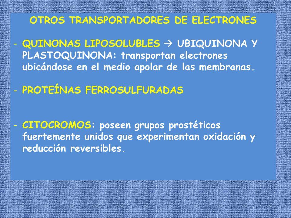 OTROS TRANSPORTADORES DE ELECTRONES