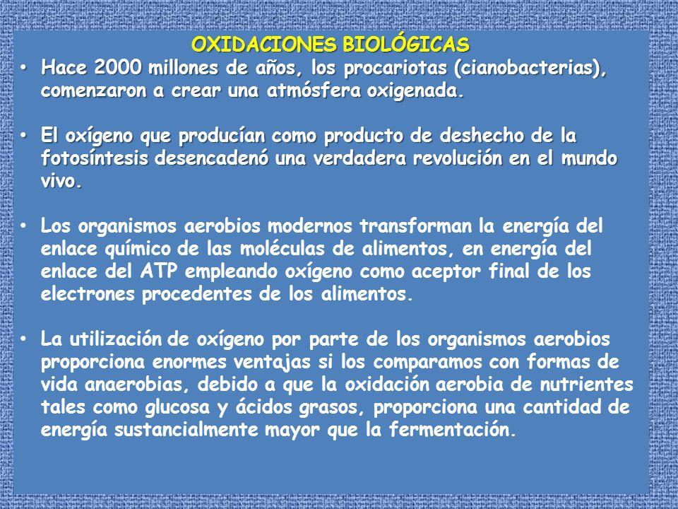 OXIDACIONES BIOLÓGICAS