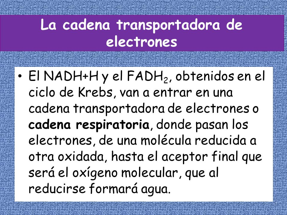 La cadena transportadora de electrones